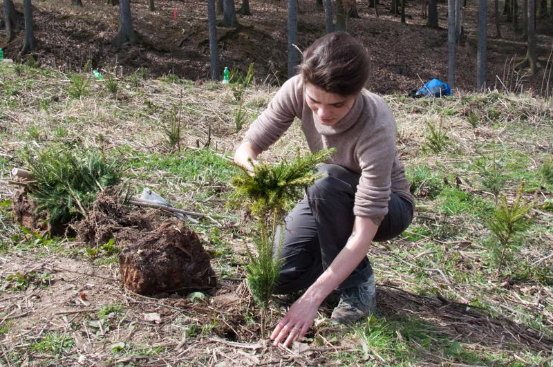 Jak jsme zasadili les
