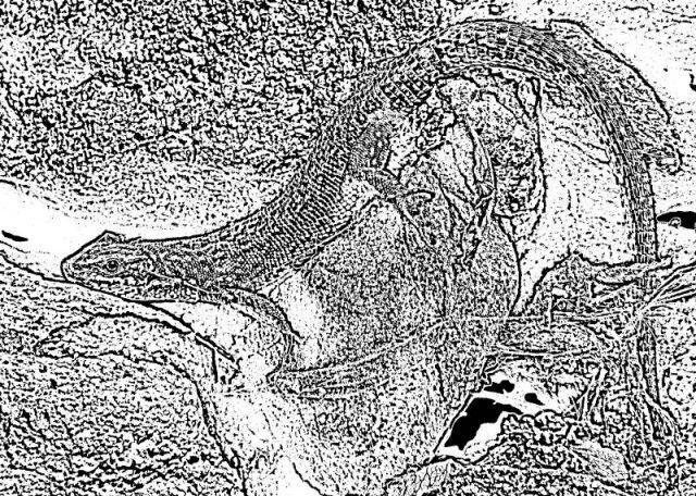 Ještěrka v kameni