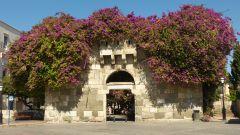 Tax Gate v Kosu