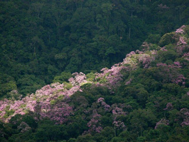 Krásy Národního parku Intervales