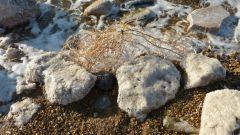 Mrtvé moře - sůl