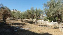 Beit Sahur - zahrada