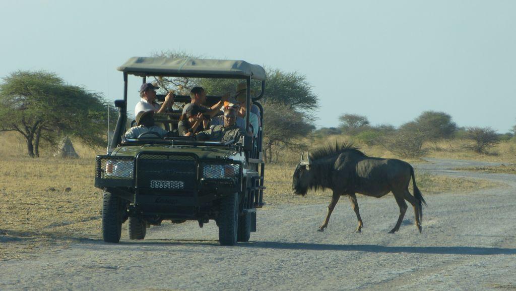 Safari v Nxai Pan