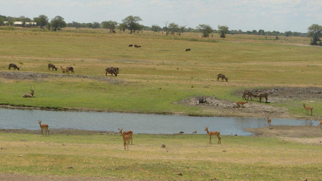 Řeka Chobe mezi Botswanou a Namibií