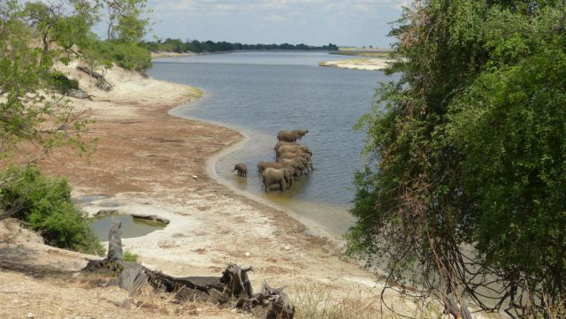 Chobe - sloni
