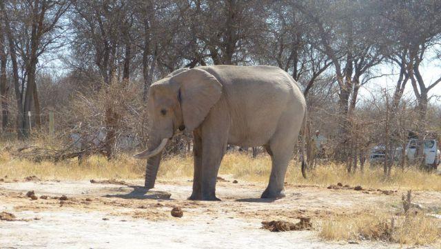 Slon - Nxai Pan