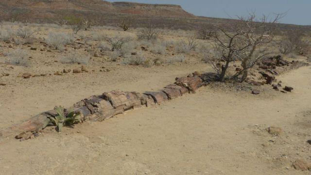 Petrified Forest - zkamenělý strom