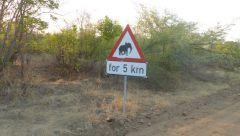 Pozor sloni