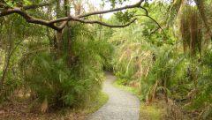 Viktoriiny vodopády - deštný les