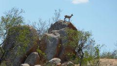 Kruger - skálolez