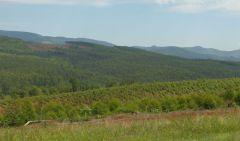Dračí hory - lesy