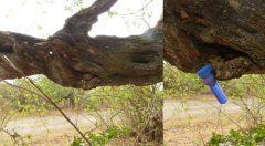 Cache v Zimbabwe