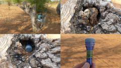 Cache v Botswaně v NP Chobe