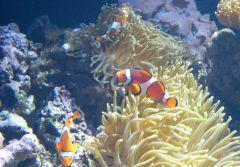 Oceanárium - Nemo s rodinou