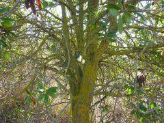 Cache na stromě (největší keška)
