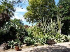 Park Estrela - sukulenty