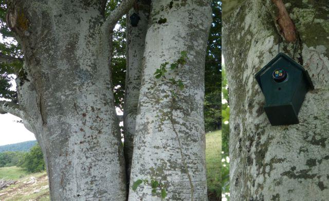 Saleve - keš na stromě