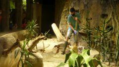 Aquatis - úklid u mangust