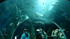 Aquatis - akvárium