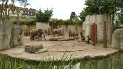 ZOO Basilej - sloni afričtí