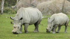 Curych - ZOO - nosorožci