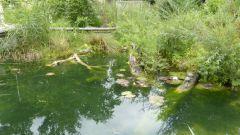ZOO Bern - želvy bahenní