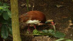 Curych - ZOO - Masoala - ibis