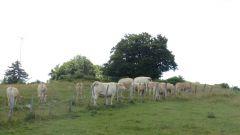 Saleve - keš v ohradě s krávami na stromě