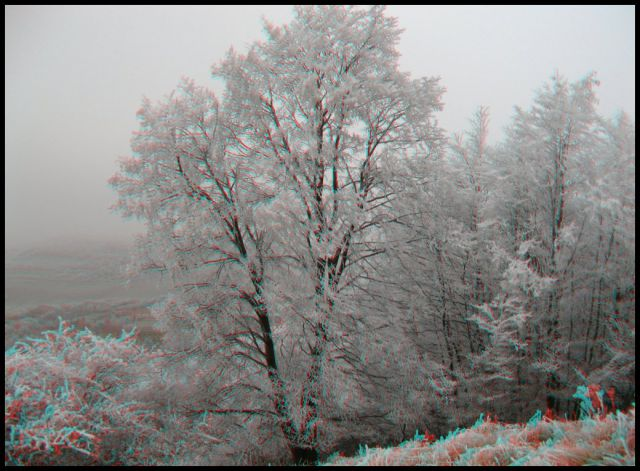Krasne ojinene stromy na kesi Lysice GCX2AG