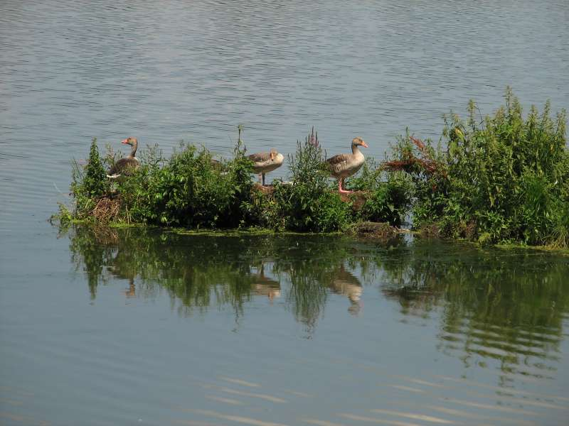 Ptačí ráj - GCVN89