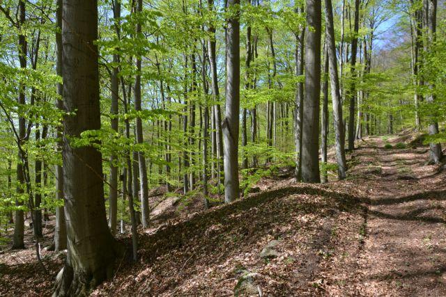 12 04 28 13.42.30 Bukové lesy cestou