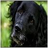 pátrání po vodícím psu Jagovi - poslední příspěvek od Dzedzy
